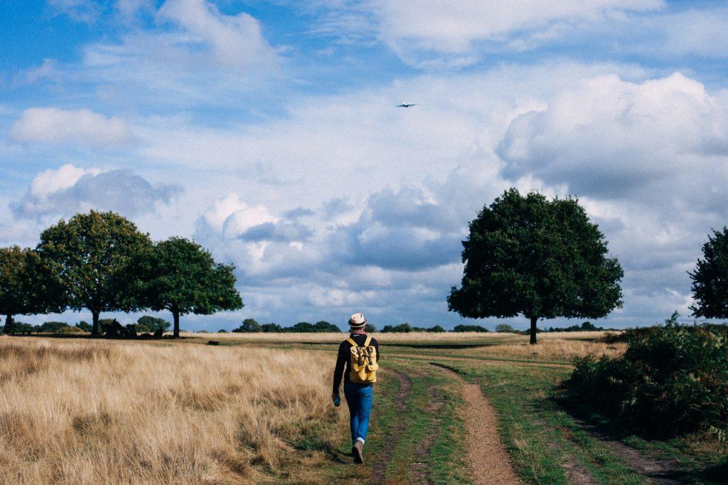 afvallen door wandelen in een weiland in nederland